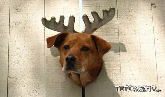 Dog_With_Antlers