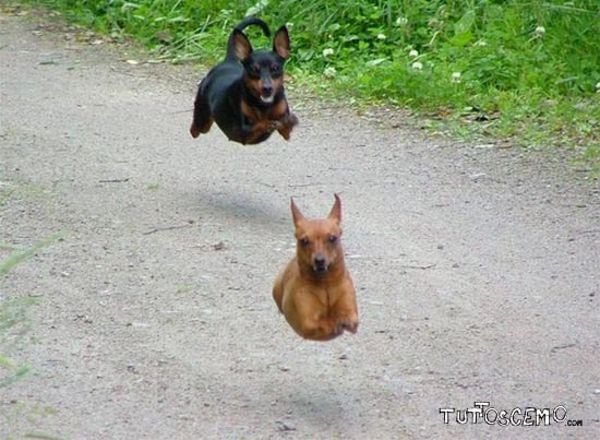 Flying_Dogs