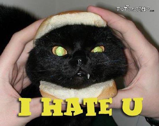 I_Hate_You