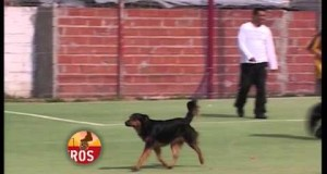 Cane entra in campo e fa goal
