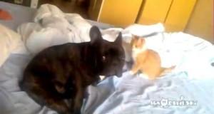 Gatto Assassino