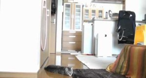 Il gatto portiere
