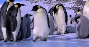 La Fail compilation dei Pinguini