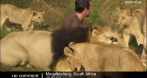 L'abbraccio dei leoni