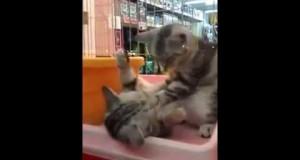 Massaggio Micioso