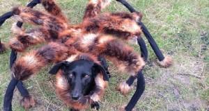 Spider Dog – Come far morire di paura le persone